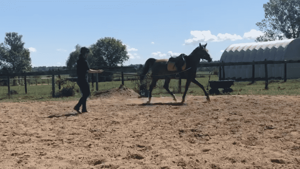 Lunging For the First Time
