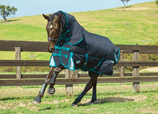 The Best Horse Blanket to Match Your Every Need 6