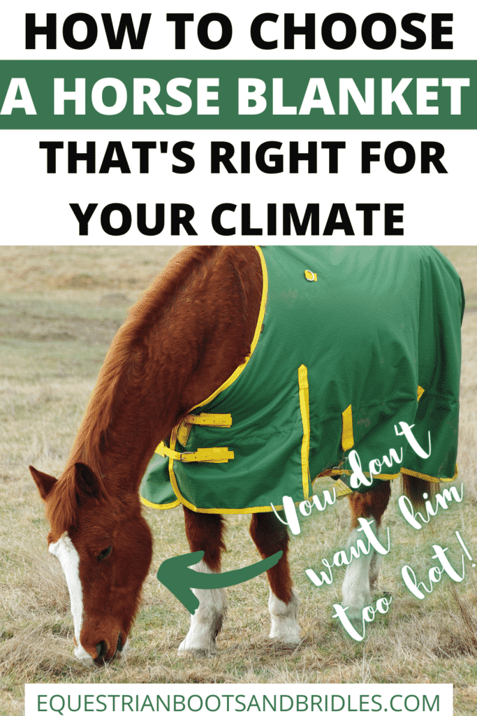 How to Choose a Horse Blanket That's Right for Your Climate 7