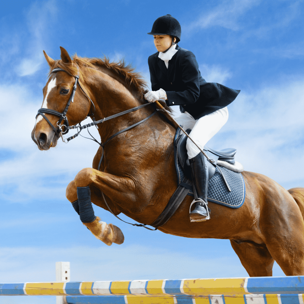 Horse Jumping | How to Master Jumping While Minimizing Fall Risk 4