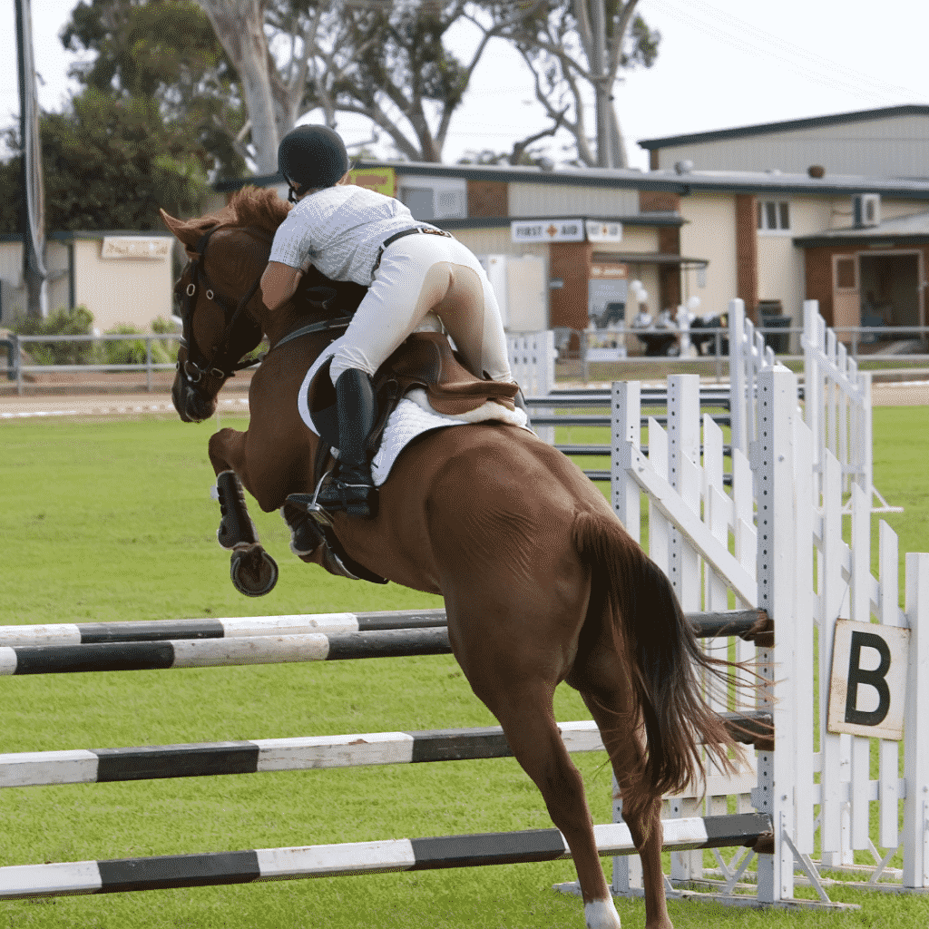 Horse Jumping | How to Master Jumping While Minimizing Fall Risk 6