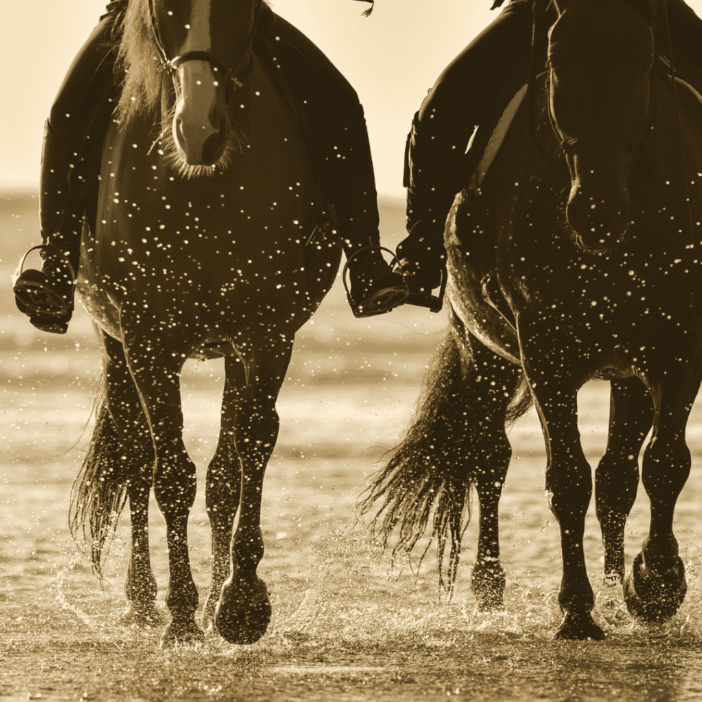 The Horse Buddy System: The 1 Secret to a Better Ride 2