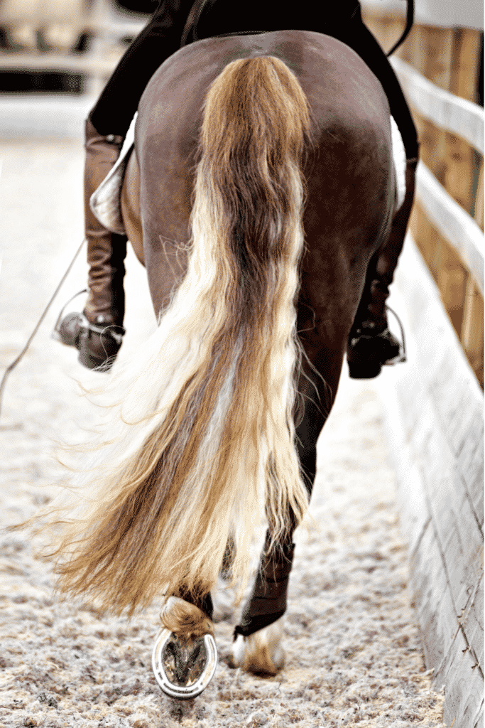 Horseback Riding Hairstyles