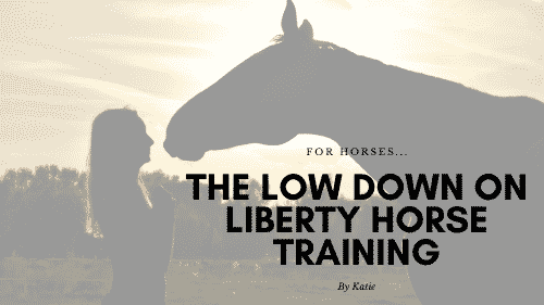 Liberty Horse Training