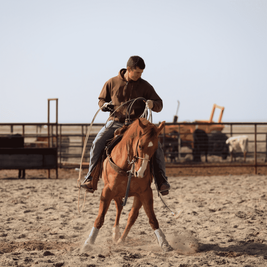 The First Steps to Training a Horse 4