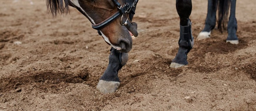 5 Horse Hoof Care Essentials to Keep Hooves Healthy 10