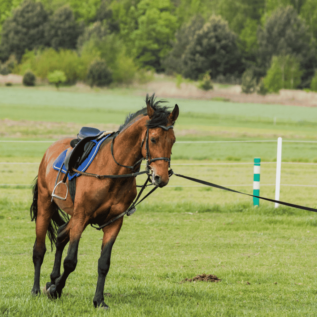 The First Steps to Training a Horse 6