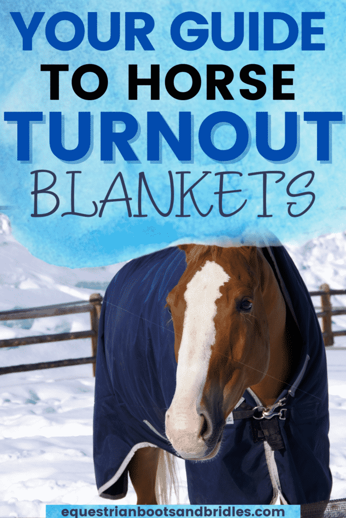 A Guide to Horse Turnout Blankets 5