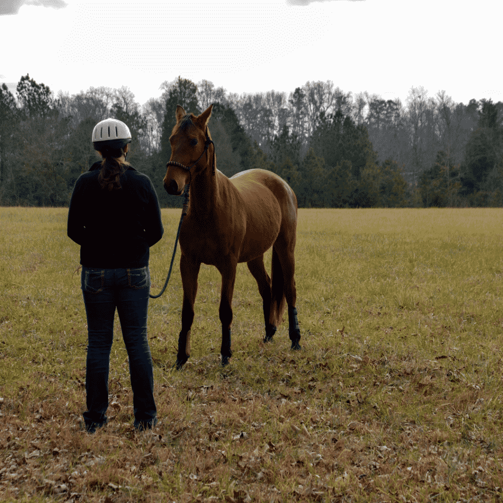 The First Steps to Training a Horse 2