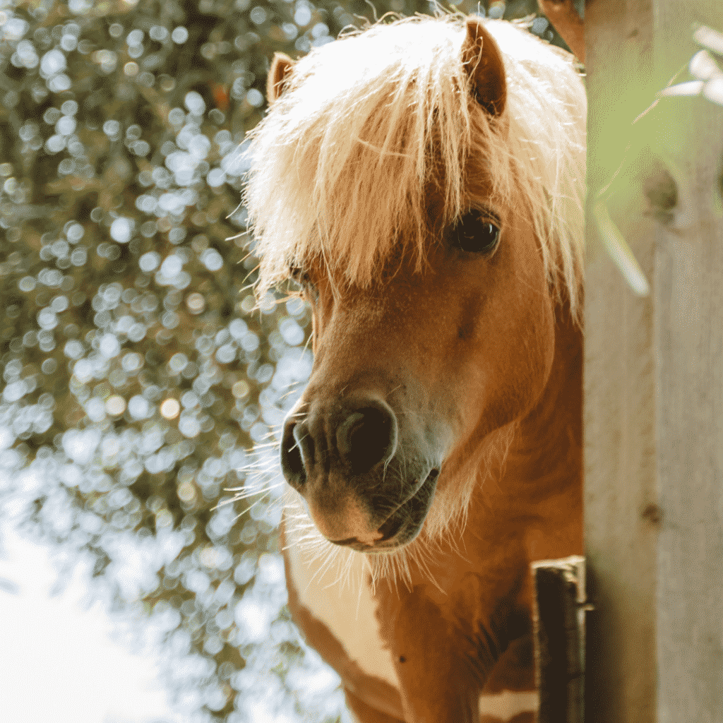 7 Pony Pictures You Definitely Don't Want Your Kid to See 8