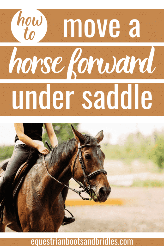 How to Move A Horse Forward Under Saddle 4
