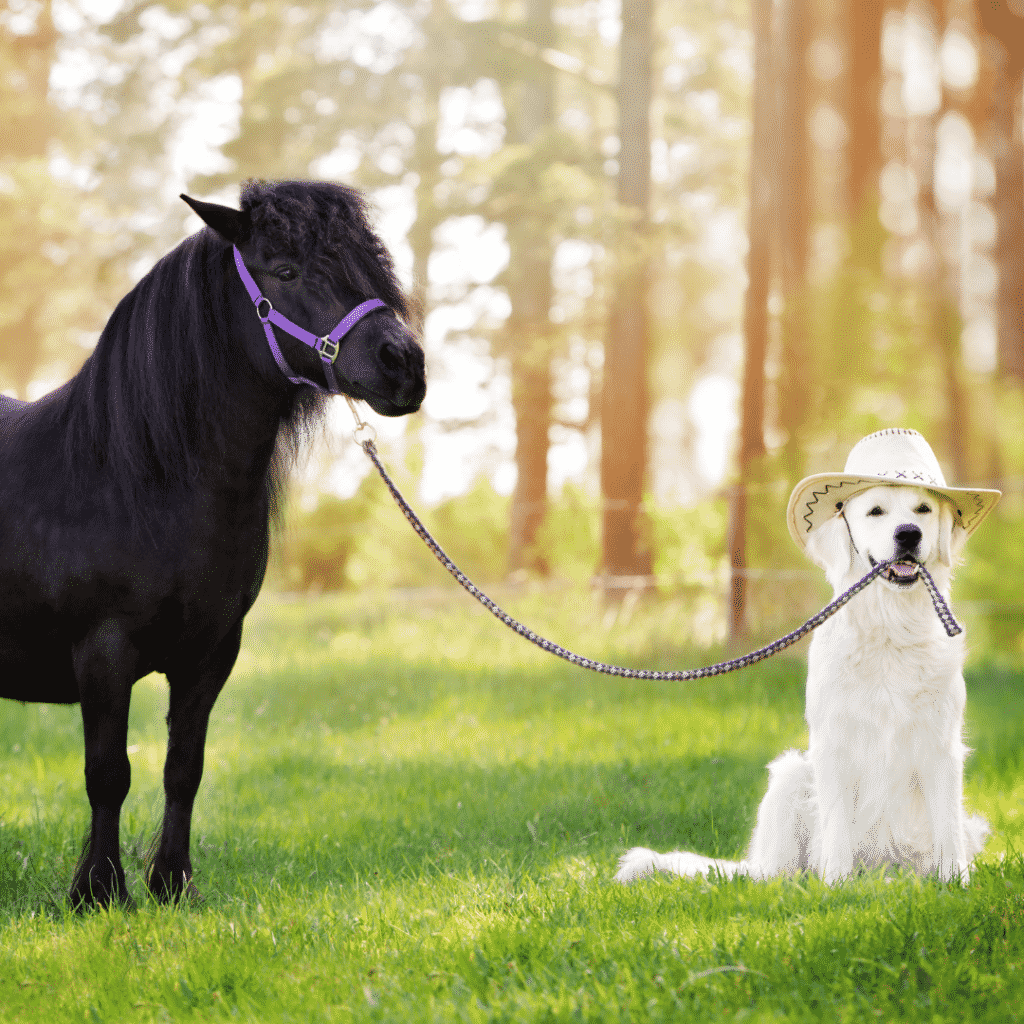 The Horse Buddy System: The 1 Secret to a Better Ride 7