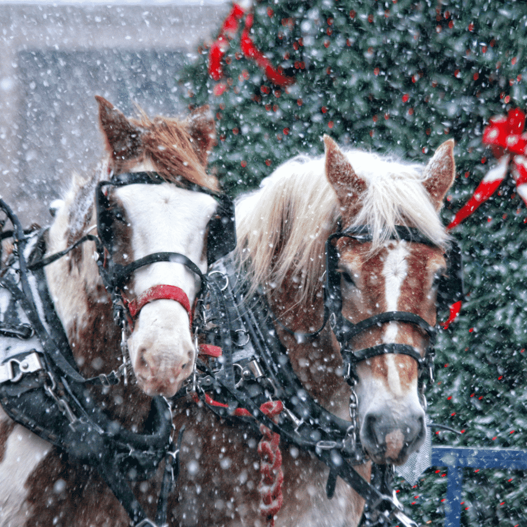 Horse Christmas Gifts for Your Favourite Equestrian 6