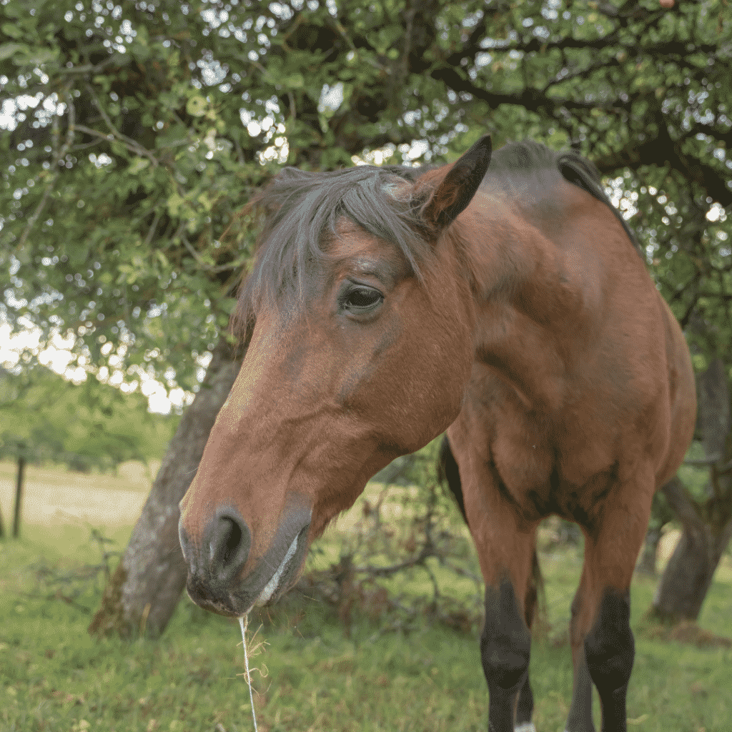 How to Fix Your Horse's Dry Skin
