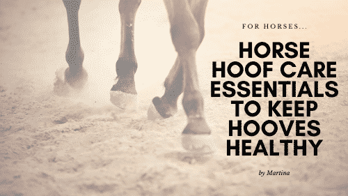 Horse Hoof Care Essentials to Keep Hooves Healthy