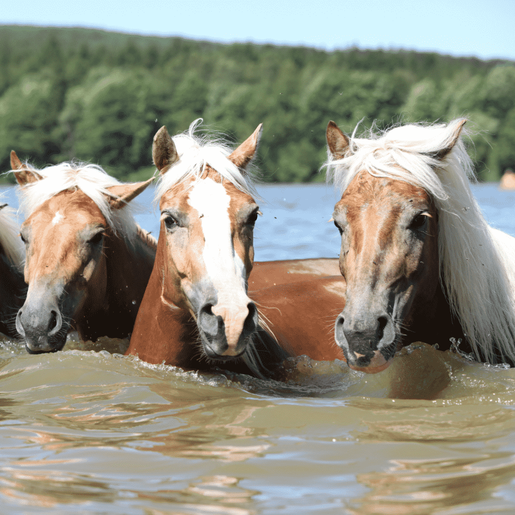 Can horses swim? Yes!