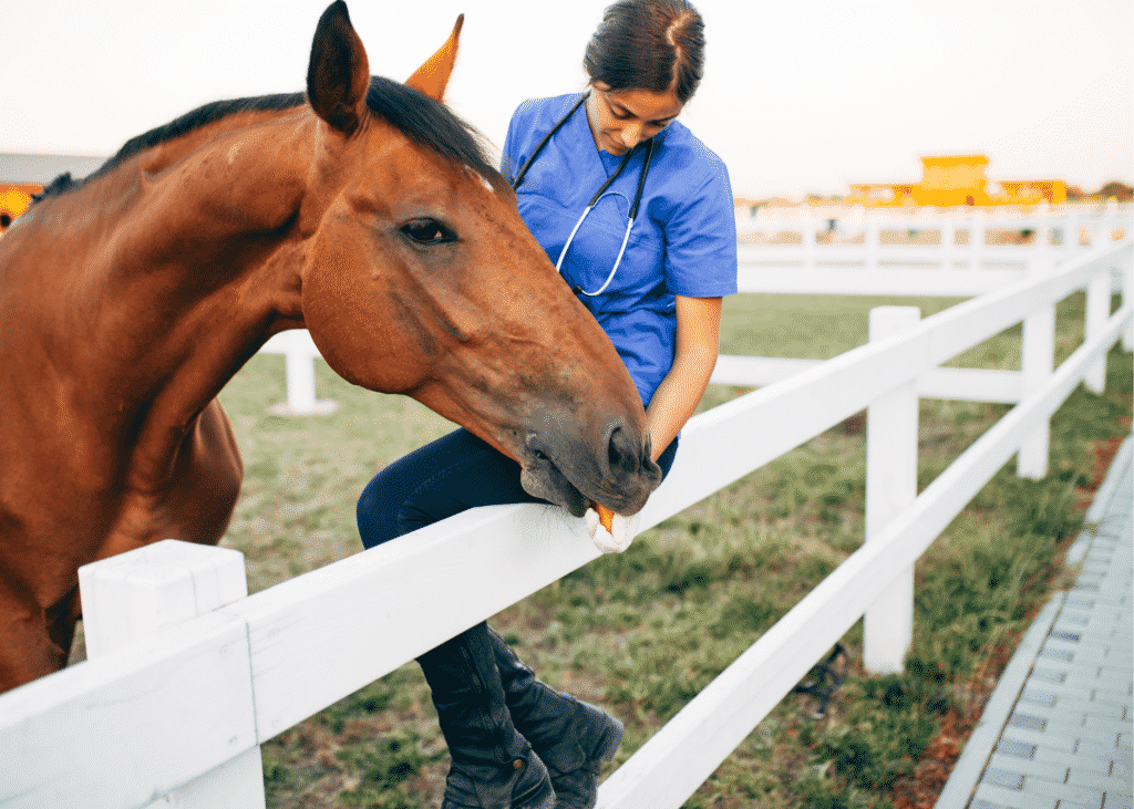 10 Questions to Always Ask When Buying a Horse 2