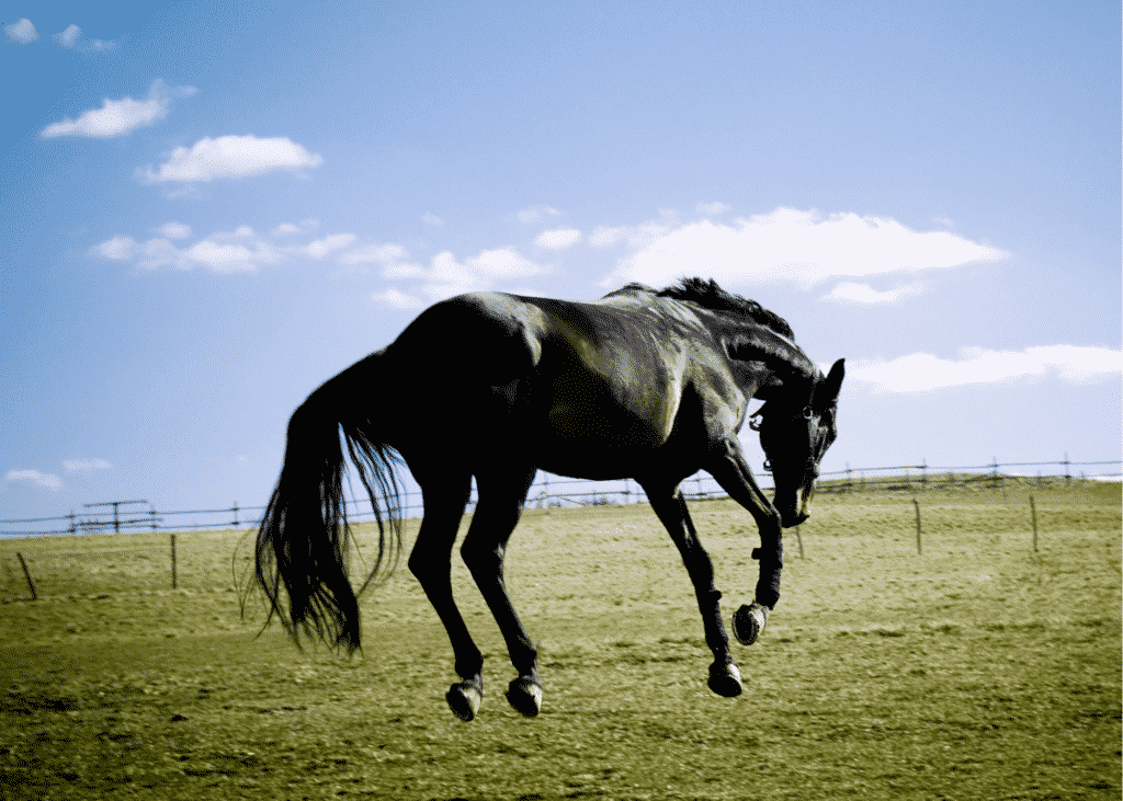 10 Questions to Always Ask When Buying a Horse 8