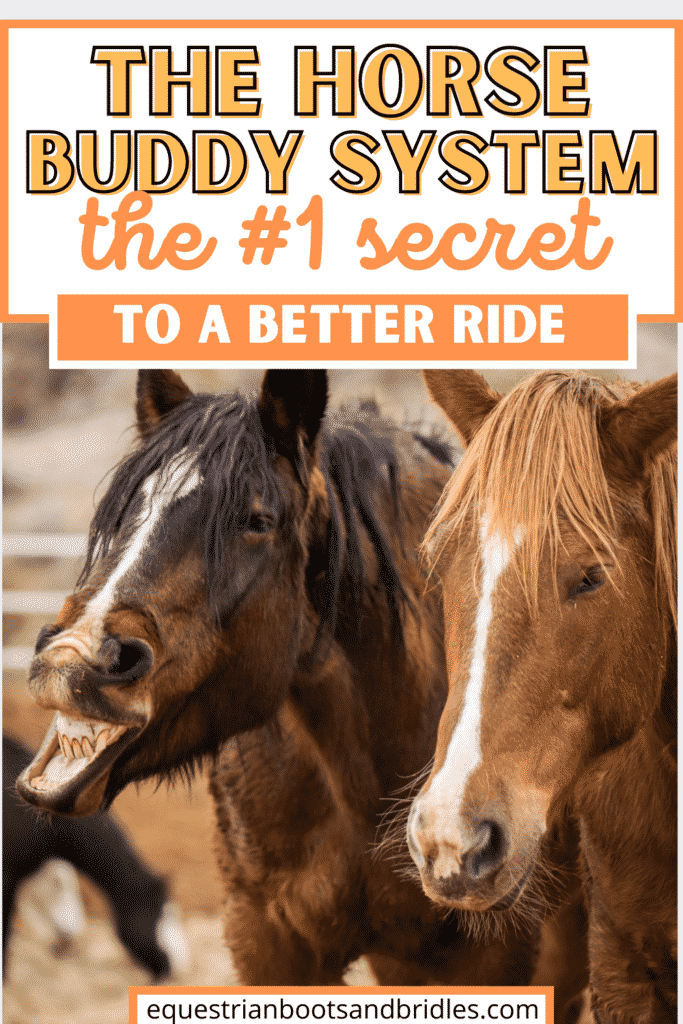 The Horse Buddy System: The 1 Secret to a Better Ride 9