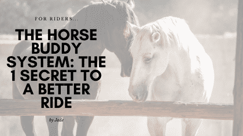 The Horse Buddy System: The 1 Secret to a Better Ride