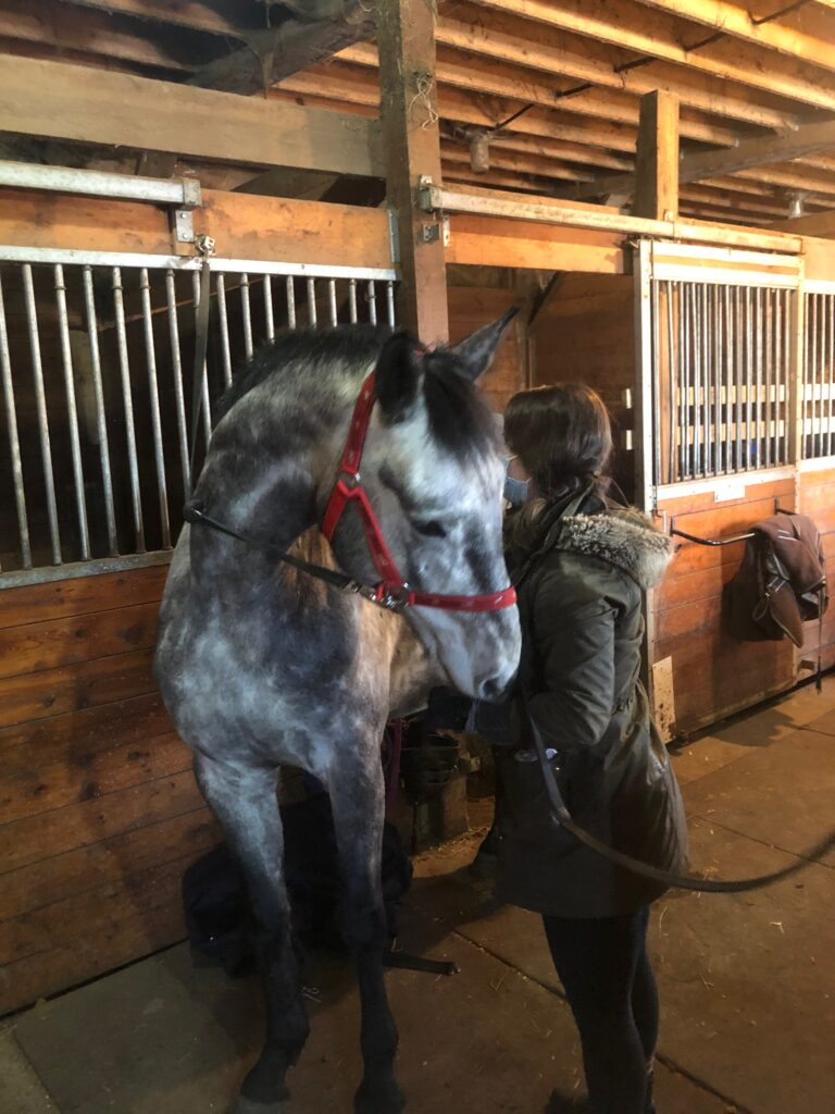 How to Buy Your First Horse 4