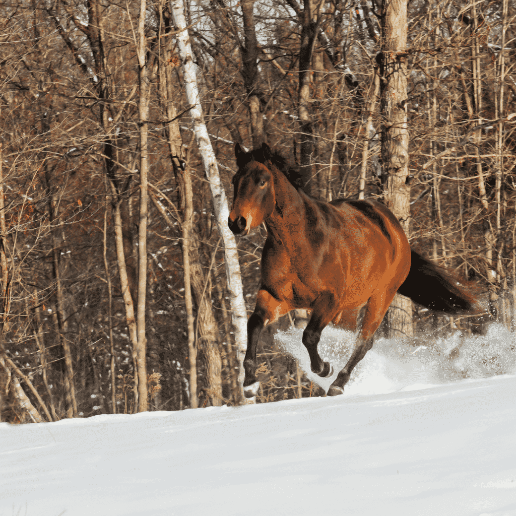 How to Choose a Horse Blanket That's Right for Your Climate 3