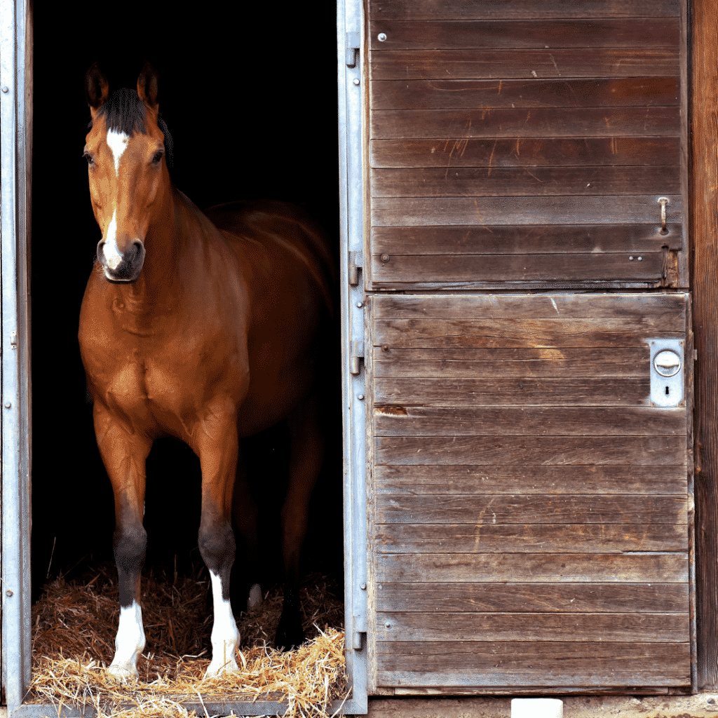 Buying Your First Horse - The Basics of Horse Ownership for Beginners 15