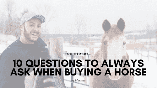 10 Questions to Always Ask When Buying a Horse