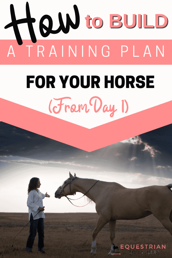 Building A Young Horse Training Plan: How do you Train a young horse