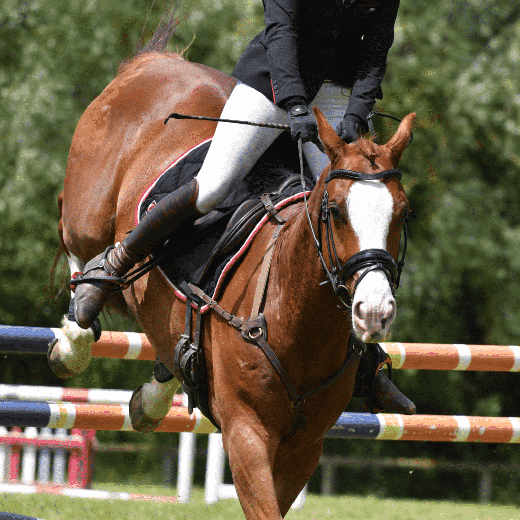 English Horseback Riding: Learning to Jump on a Horse 3
