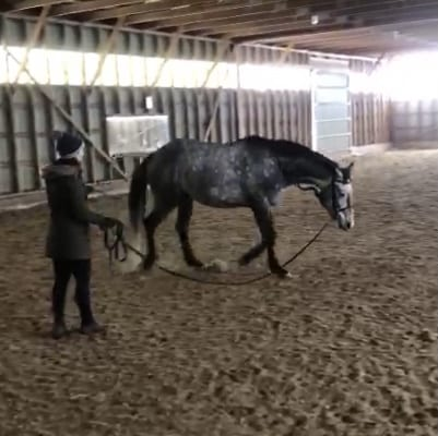 Lunging Rudy, My 4-Year Old Warmblood Cross