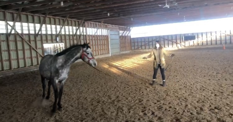 Lunging Rudy At A Canter