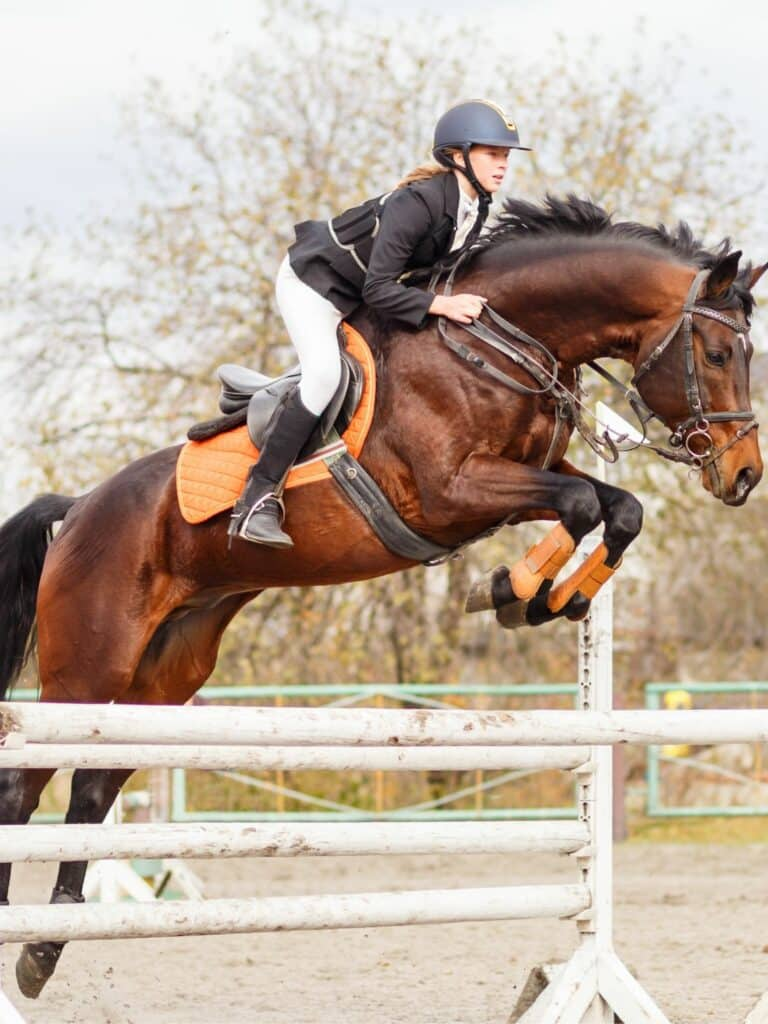 Horse Riding Styles: 5 Different Types 12
