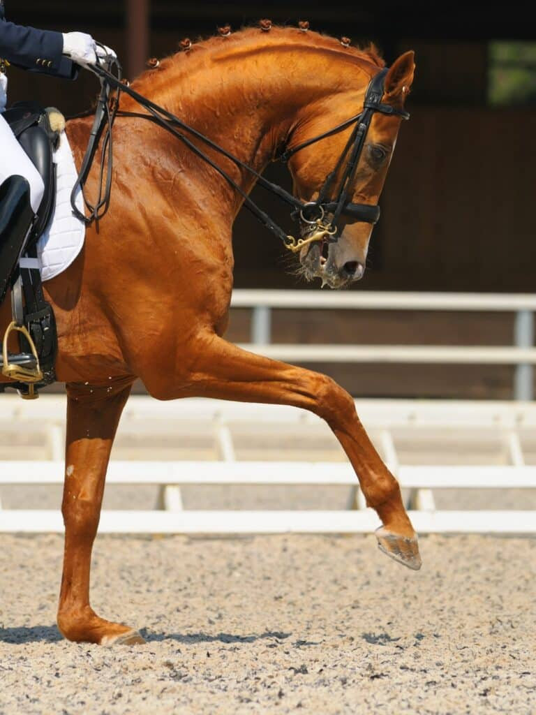 horse riding styles - dressage