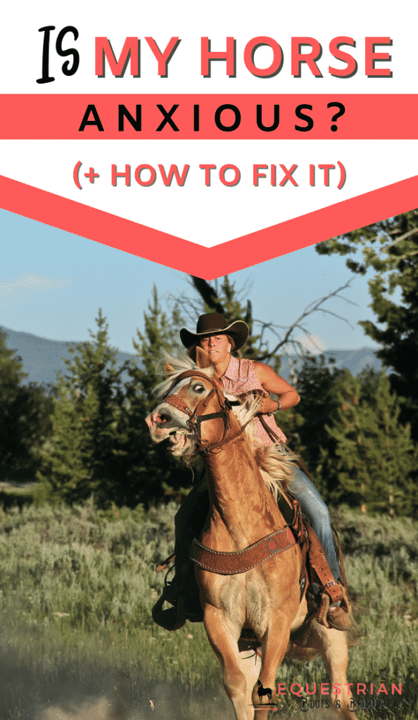 Is my horse naturally anxious and how to calm an anxious horse?