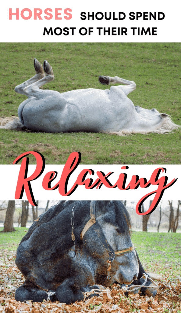 Is your horse anxious and exercises to relax a tense horse