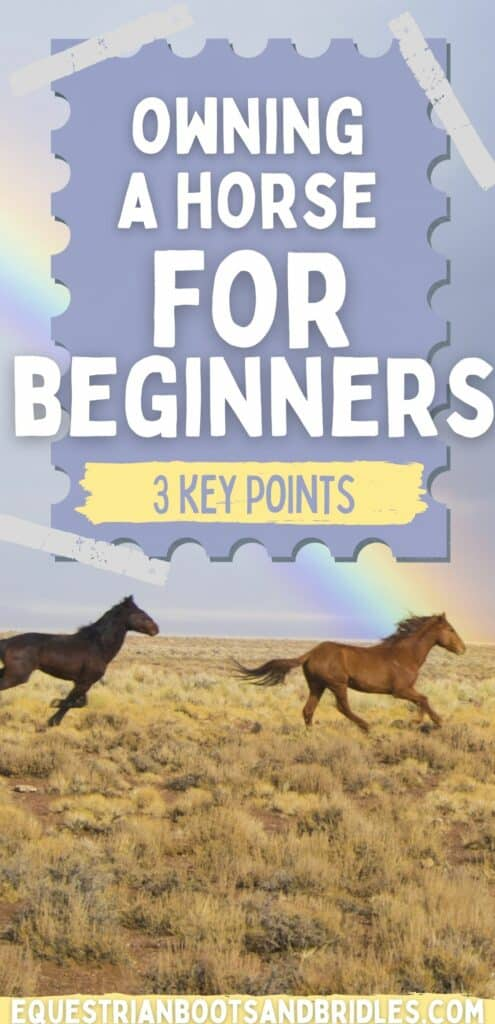 Owning a Horse For Beginners: 3 Great Points To Keep In Mind 6