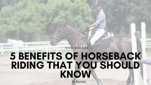 5 Benefits of Horseback Riding That You Should Know 1