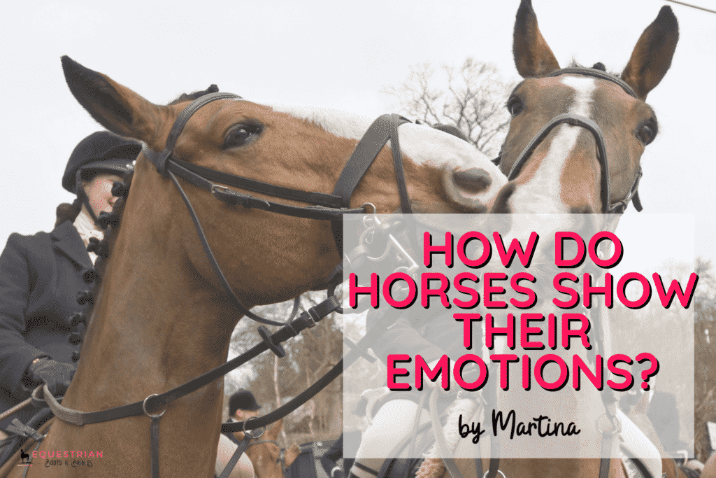 How Do Horses Show Their Emotions? [+ Horse Emotions Chart]