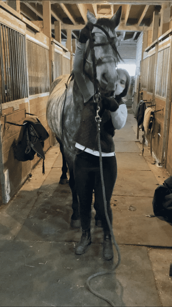 Rudy throwing his head as I'm trying to get the bridle on.