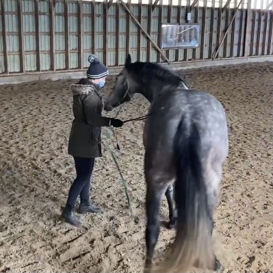 Rudy stopping and then pushing into me with his shoulder while I'm trying to lunge him while I'm trying to push him back out of my space with the lunge whip.