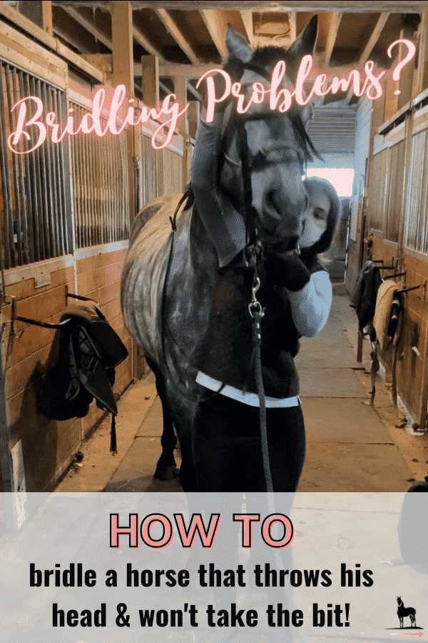how to put a bridle on a difficult horse