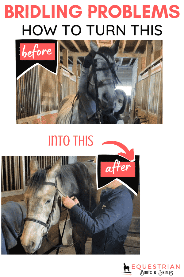 bridling problems and how to put a bridle on a difficult horse