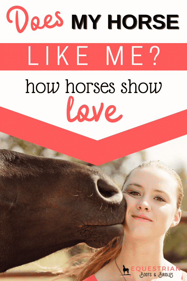 Does my horse like me? How to know if a horse likes you and signs your horse has bonded with you